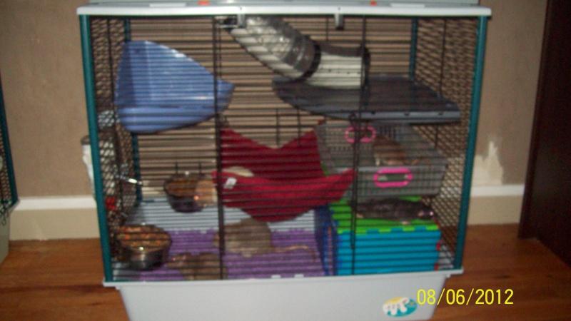 Photos de vos cages - Page 21 100_3216