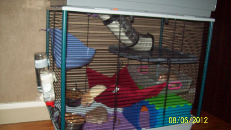 Photos de vos cages - Page 21 100_3217