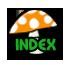 Index? Forum? Mr-ind10