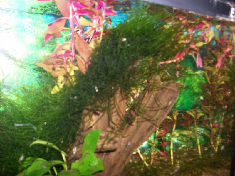 des ''arbres'' dans nos bac ?!?!  Photo_13