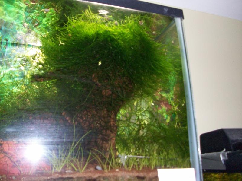 des ''arbres'' dans nos bac ?!?!  Photo_15