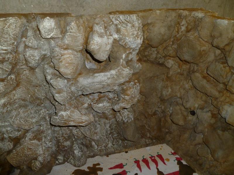 Tag 23 sur Forumaquario.org P1030924