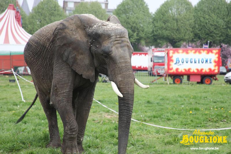 Jenny, l'éléphante de Bouglione Tourna10