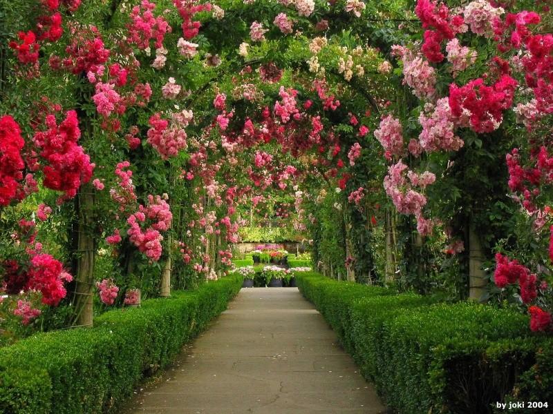 Jardim das Rosas Rosas_10