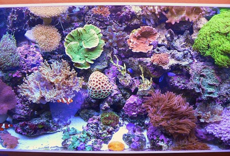 Le bac des Maniacodesrécifs (méthode Reefcorner) Bac19010