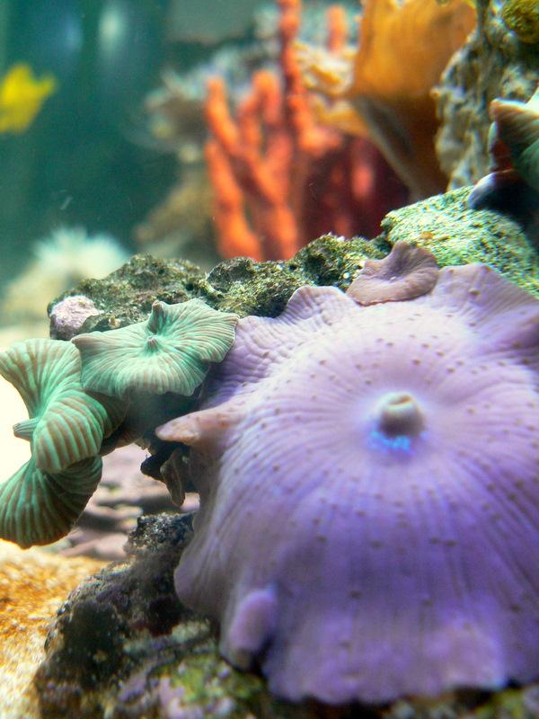 Le bac des Maniacodesrécifs (méthode Reefcorner) P1020710