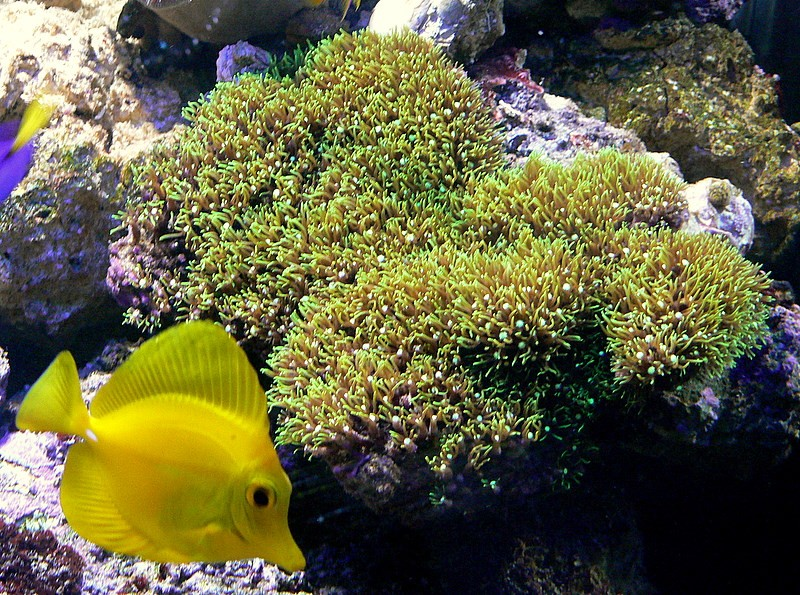 Le bac des Maniacodesrécifs (méthode Reefcorner) P1020810