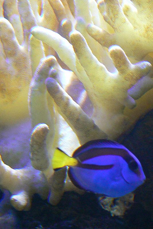 Le bac des Maniacodesrécifs (méthode Reefcorner) P1020811