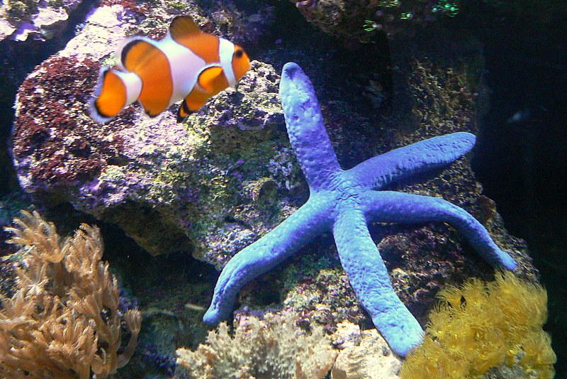 Le bac des Maniacodesrécifs (méthode Reefcorner) P1020812