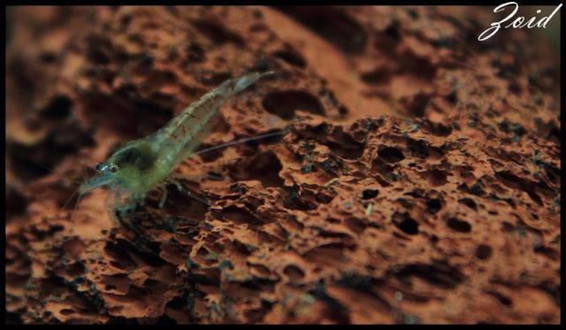 54 & 25L (01/04/13 - Refonte 54l Aquascape p3) Bp00210