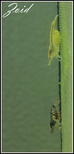 54 & 25L (01/04/13 - Refonte 54l Aquascape p3) Img00110