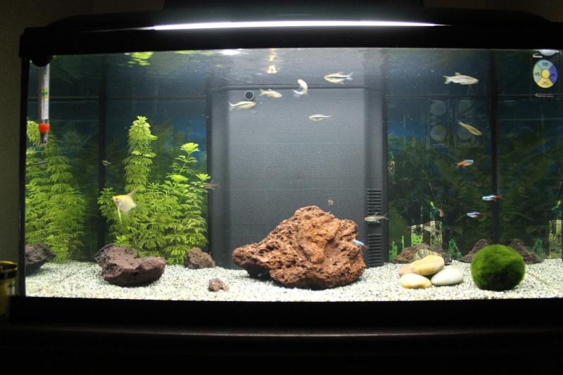 54 & 25L (01/04/13 - Refonte 54l Aquascape p3) Img_4412
