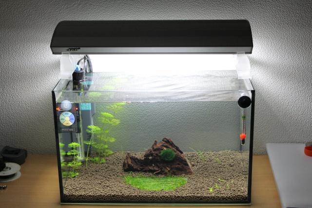 54 & 25L (01/04/13 - Refonte 54l Aquascape p3) Img_4712