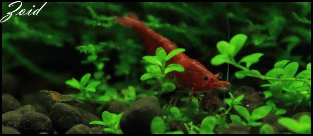 54 & 25L (01/04/13 - Refonte 54l Aquascape p3) Redche11