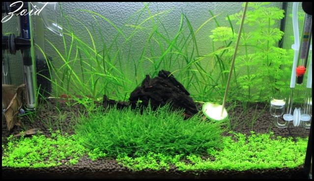 54 & 25L (01/04/13 - Refonte 54l Aquascape p3) Sans_t20