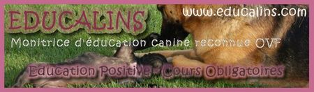 Rencontres canines qui vous interpellent  Educal10