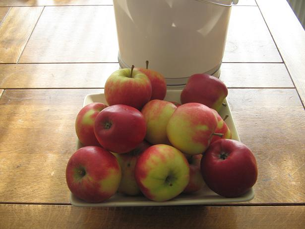 Un seau de pommes Mestir10