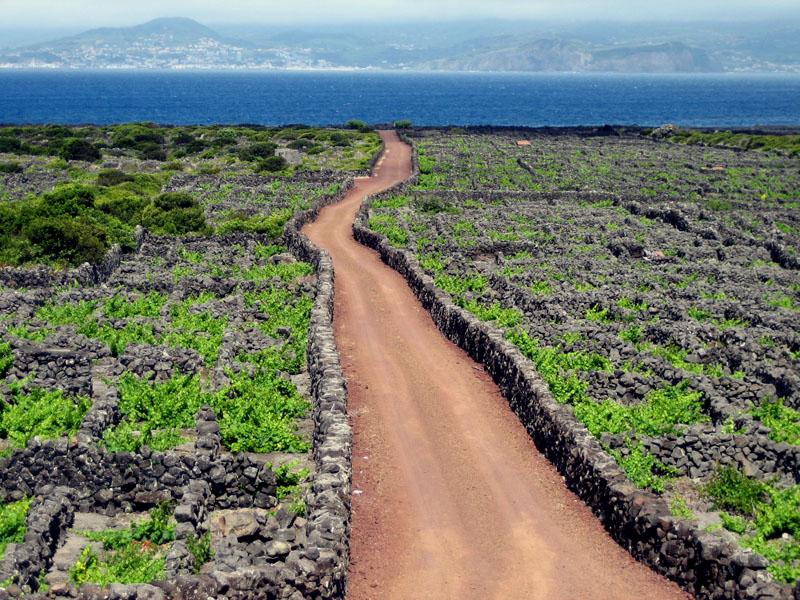 Açores en fin juin - mi-juillet Picovi10