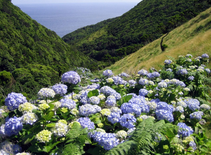 Açores en fin juin - mi-juillet Saojoh10