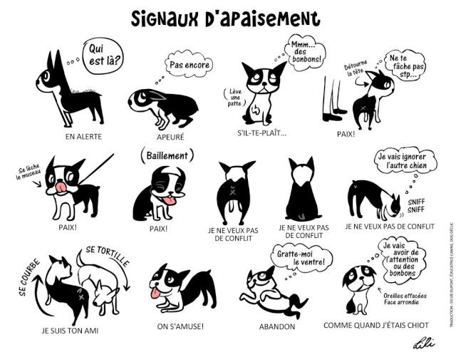 Schéma sur le langage canin 68766210