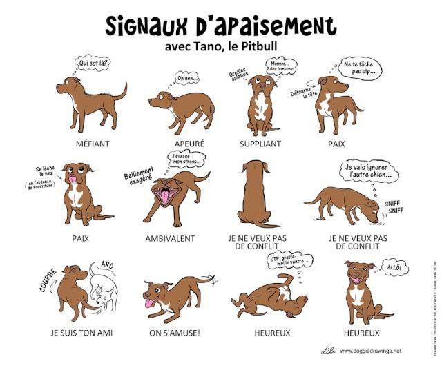 Schéma sur le langage canin 68766211