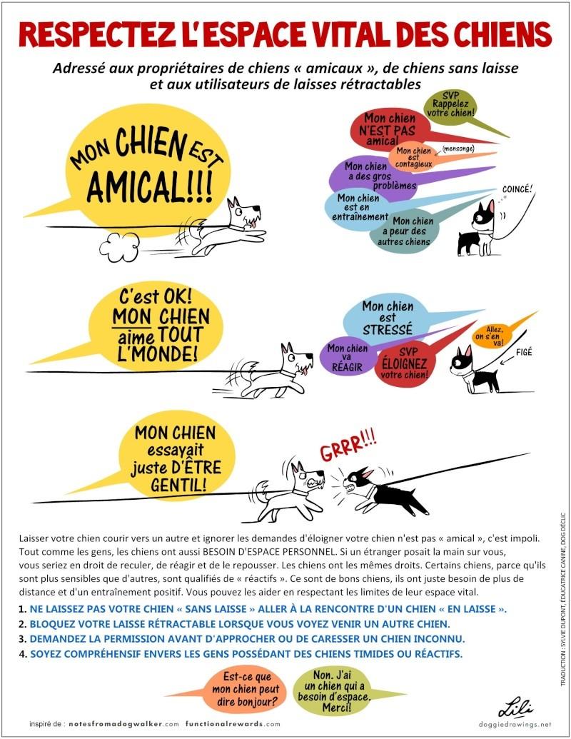 Eduquer les enfants à la présence des chiens Dinos-11