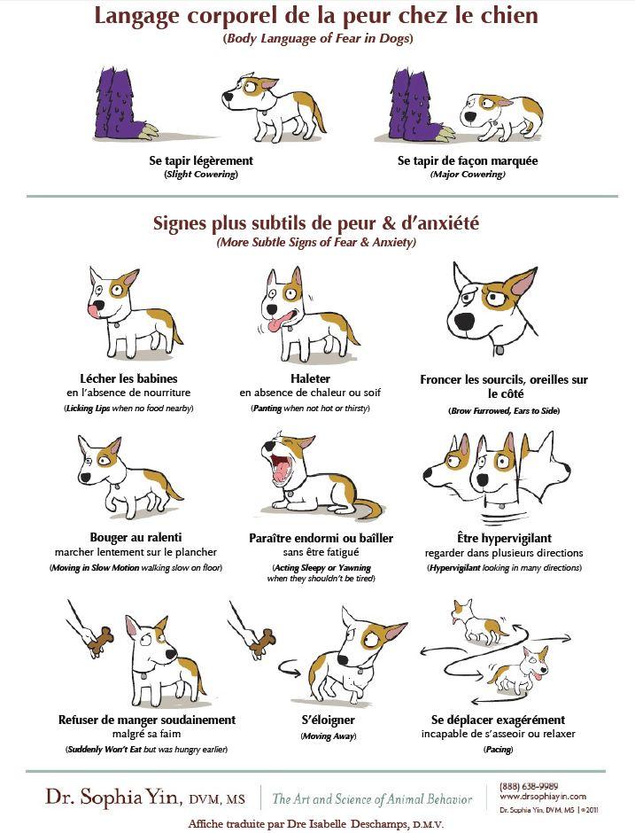 Schéma sur le langage canin Langag10
