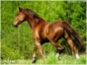 equus stable, bientôt 1 moins de réouverture ! Baltiq10