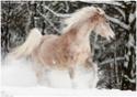 equus stable, bientôt 1 moins de réouverture ! Chucab10