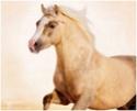 equus stable, bientôt 1 moins de réouverture ! Estrel11