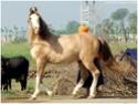 equus stable, bientôt 1 moins de réouverture ! Magove10