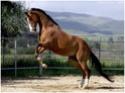 equus stable, bientôt 1 moins de réouverture ! Shulst10