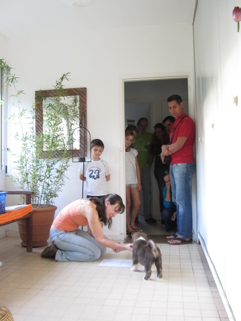 19e Portée de Ludsyga : Etsu x Dalton (02/04/12) - pour les maitres d'Etsu - Page 3 20121239