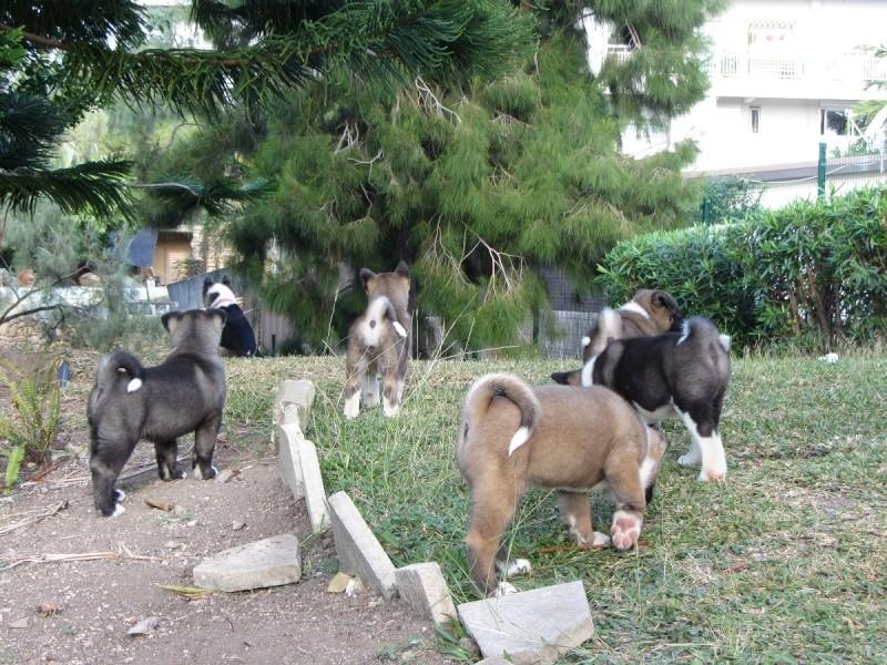 19e Portée de Ludsyga : Etsu x Dalton (02/04/12) - pour les maitres d'Etsu - Page 3 20121383