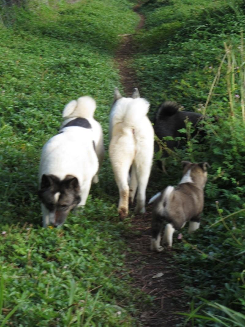 19e Portée de Ludsyga : Etsu x Dalton (02/04/12) - pour les maitres d'Etsu - Page 3 20121396