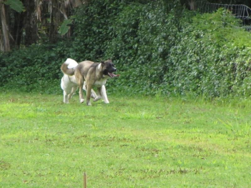 19e Portée de Ludsyga : Etsu x Dalton (02/04/12) - pour les maitres d'Etsu - Page 6 20122208