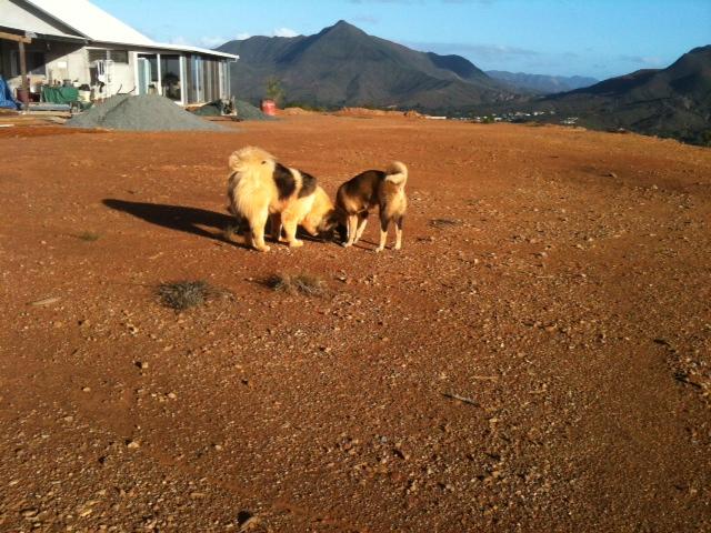 19e Portée de Ludsyga : Etsu x Dalton (02/04/12) - pour les maitres d'Etsu - Page 6 Aloha_12