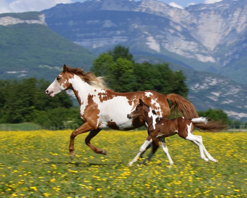"Concours : ""cheval au galop"" GAGNANTE : TItâne - Page 2 Dsc03512"