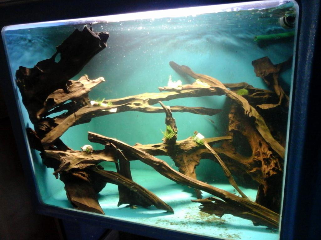 Idée de bac décor racines Photo010