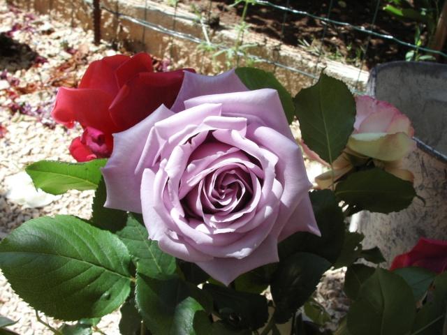 Fleurs de maëlie 0-les_10