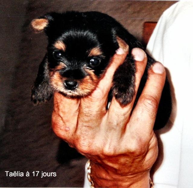 Taëlia mon Amour 3_tael10