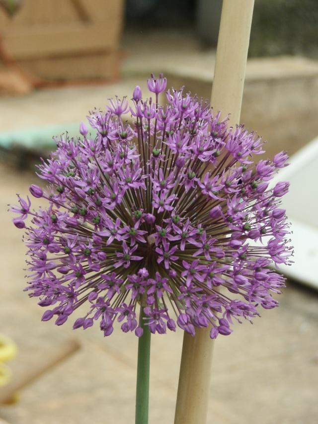 Fleurs de maëlie Kif_1910