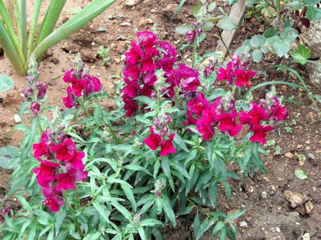 Fleurs de maëlie Kif_1911