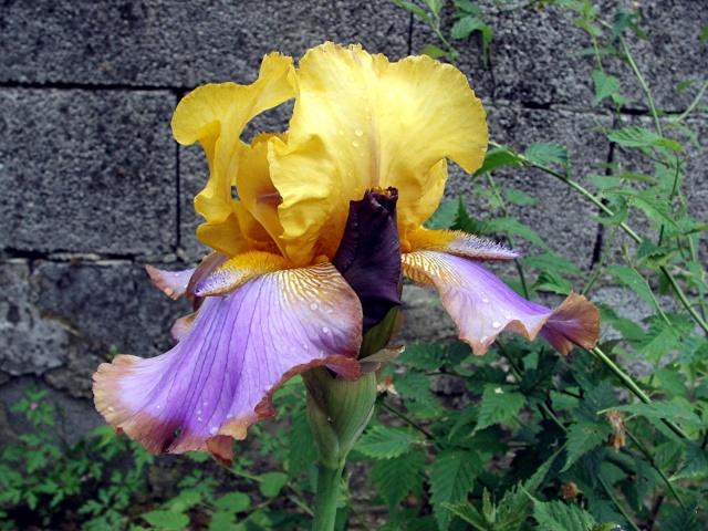 Fleurs de maëlie Kif_1912