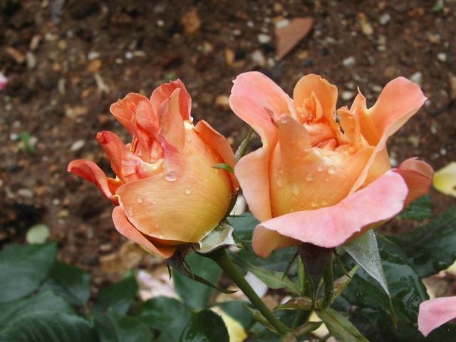 Macro photo de fleurs Kif_8310