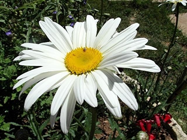 Macro photo de fleurs Kif_8710