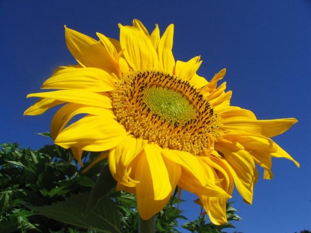 Fleurs de maëlie Kif_8810