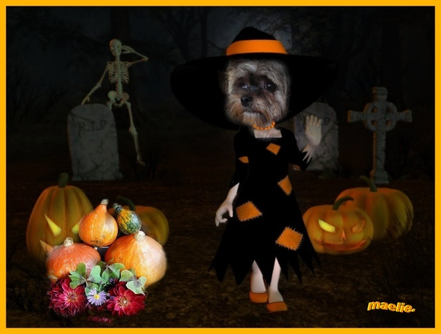 Montages pour HALLOWEEN Maelie10