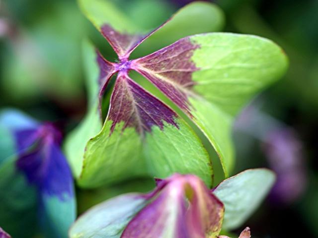 Macro photo de fleurs P7130410