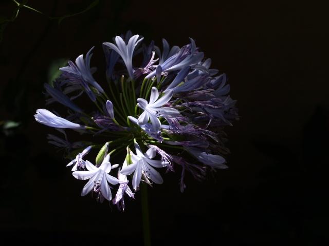 Macro photo de fleurs P7130411